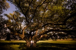 @PhotographerAmy Elizabeth Birdsong Photography Texas Engagement Ideas-22