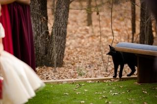 @PhotographerAmy Elizabeth Birdsong Photography Oak Meadow Ranch Wedding Photos-39