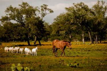@photographeramy elizabeth birdsong photography photographer amy king river ranch wedding photos-71
