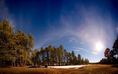 @ Photographer Amy Elizabeth Birdsong Photography Colorado Springs Black Forest Wedding Venue La Foret-43