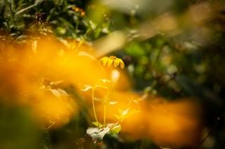 @ Photographer Amy Elizabeth Birdsong Photography -6